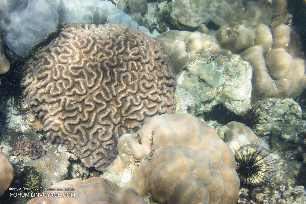 ปะการังหลีเป๊ะ